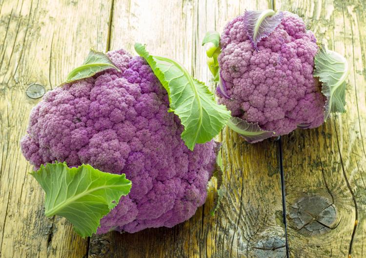 развивающие приготовить цветную капусту фиолетового цвета временного забора профлиста